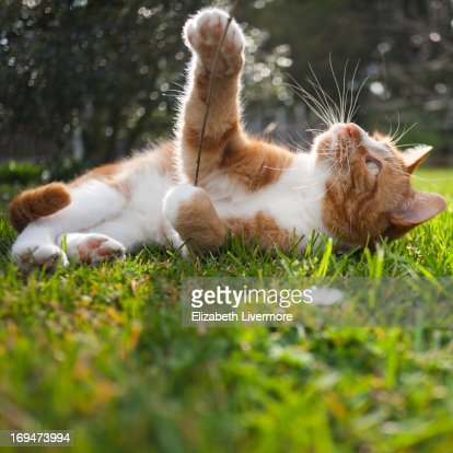 Cat playing in the sunshine : Stock Photo