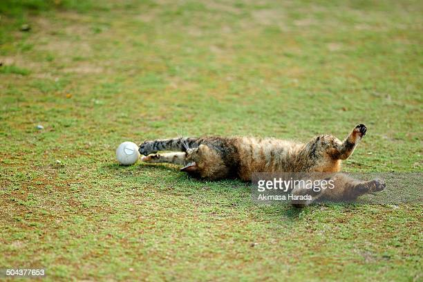 Cat playing like a goalkeeper of soccer with a b