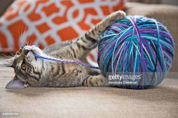 Cat playing with ball of wool