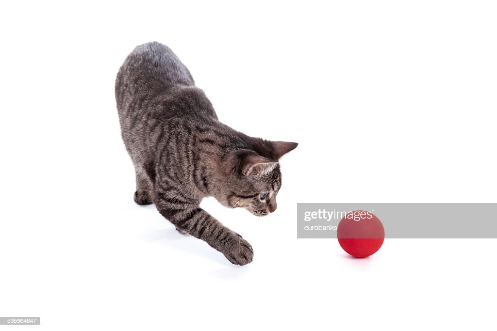 Cat Playing with Ball : Stock Photo