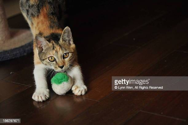 Cat playing with the ball of wool