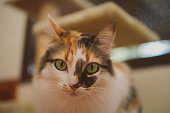 Cat portrait. Close up of beautiful long haired cat with selective focus. Domestic animals, pets concept.