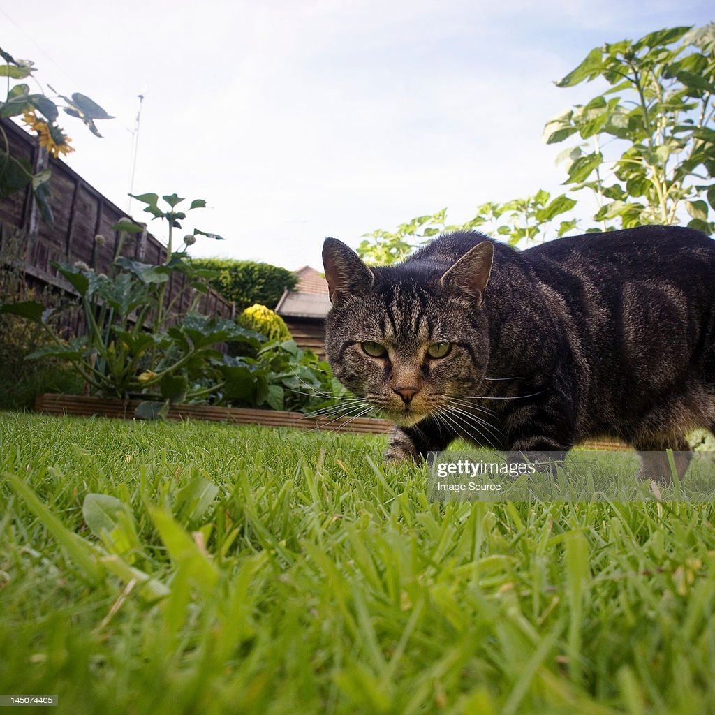 Cat prowling in garden
