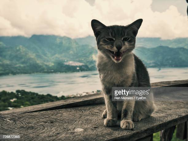 Cat Purring On Wooden Railing Against Lake And Mountains