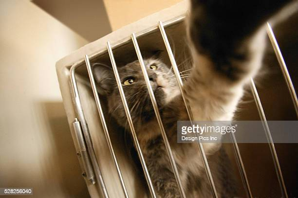 Cat Reaching Through Bars