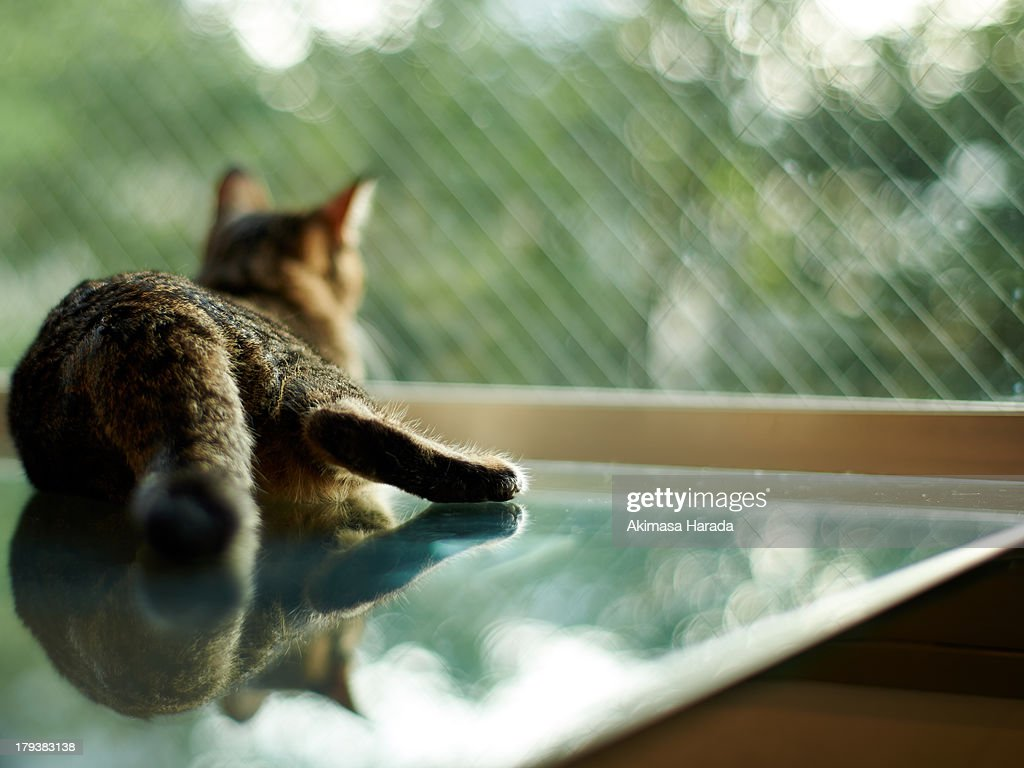 Cat relaxing in front of the window : Stock Photo