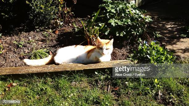 Cat Relaxing In Garden