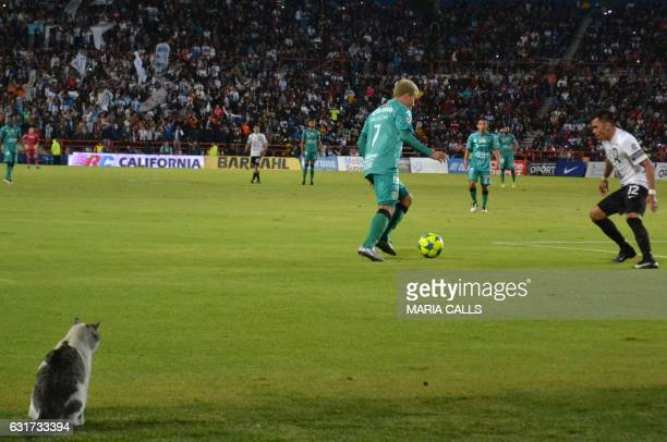 A cat remains on the field during Pachuca against Chiapas Mexican Clausura 2017 Tournament football match at Hidalgo stadium on January 14 in...
