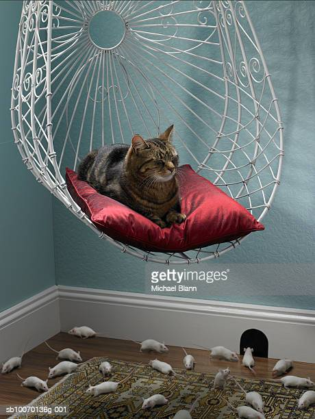 Cat resting on hanging chair while mousse playing on floor