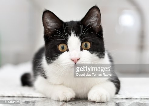 Cat resting on the floor : Stock Photo