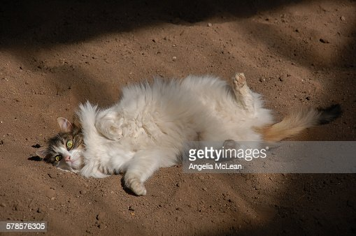 Cat rolling on back in sand with green eyes