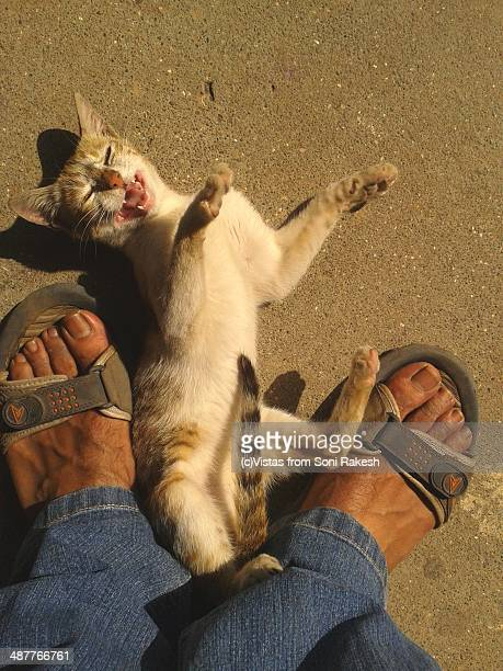 A cat rubbing up against a man's feet