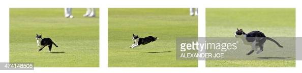 A cat runs across the cricket ground during the second test match between South Africa and Australia at Saint George's Park in Port Elizabeth on...