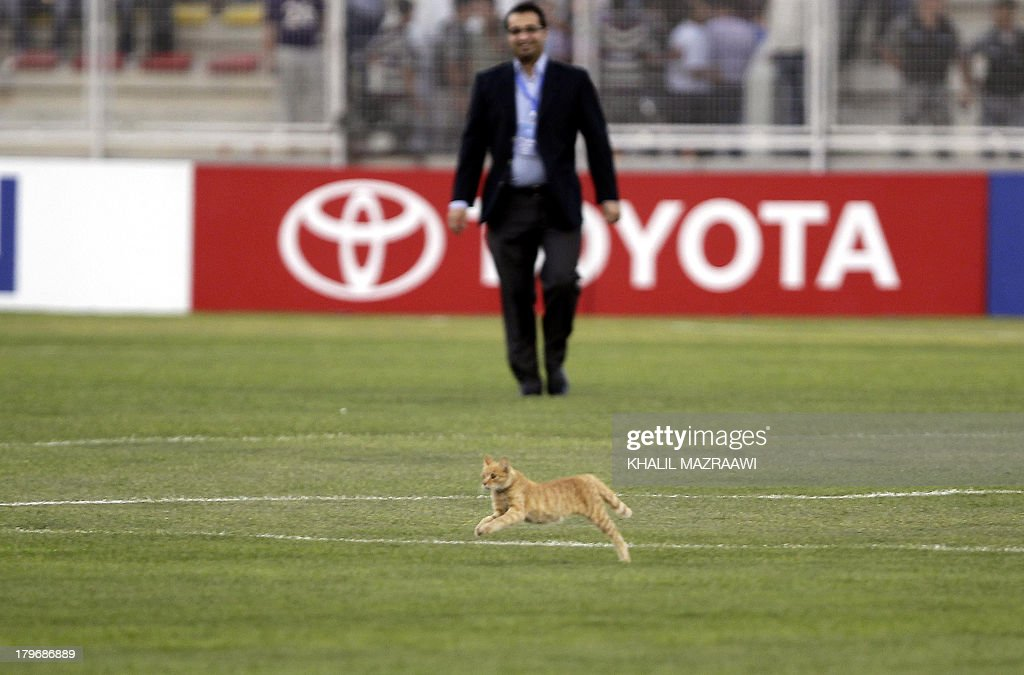 A cat runs across the pitch during Uzbekistan's 2014 World Cup qualifier football match against Jordan at the King Abdullah international stadium in Amman on September 6, 2012. The match ended in a draw. AFP PHOTO/KHALIL MAZRAAWI