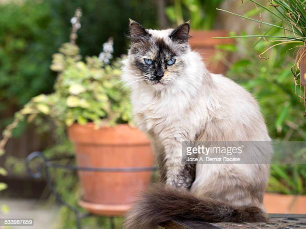 Cat sat on a table of garden