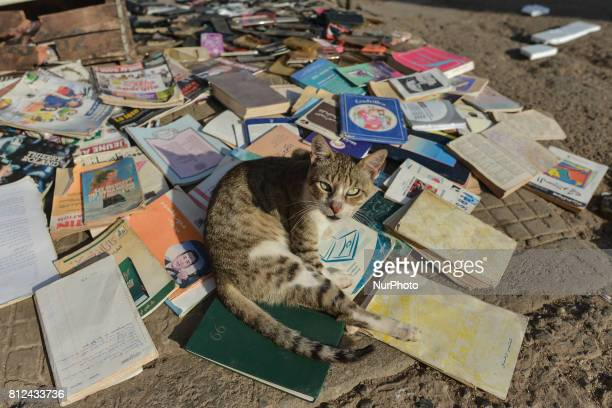 A cat seats on books for sale seen in Rabat's medina On Friday June 30 in Rabat Morocco
