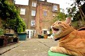 Cat shows teeth in garden