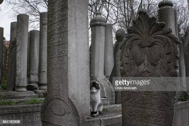 A cat sits amongst grave stones in the Eyup cemetary on March 16 2017 in Istanbul Turkey Turkey will hold its constitutional referendum on April 16...