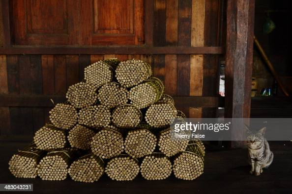 A cat sits besides a batch of cheroots the traditional Myanmar cigar in a cheroot workshop on Inle Lake