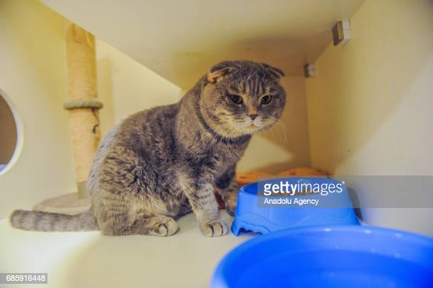 A cat sits in front of bowl of food in the 'Pet Castle' at cat hotel in AlRey Kuwait on May 19 2017 Kuwait's first cat hotel includes retiring room...