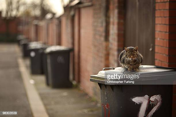 A cat sits on a bin in the back alley of a street in Bolton West one of the key election wards in the election on April 7 2010 in Bolton United...