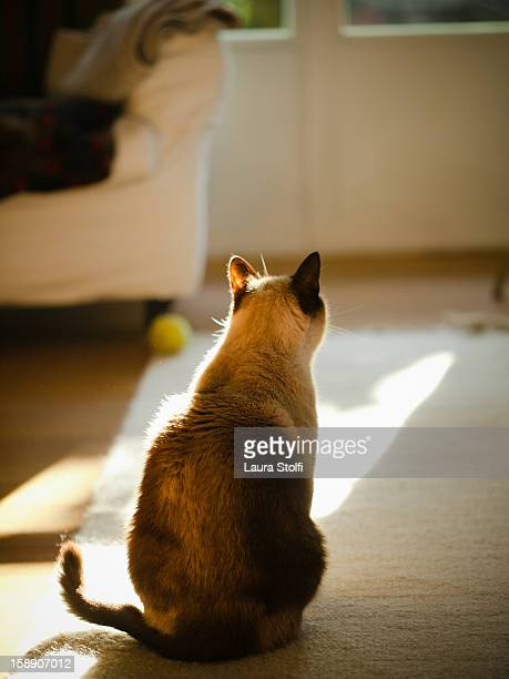 Cat sits on carpet in a sunny living room
