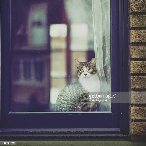 cat sitting and looking trough a window