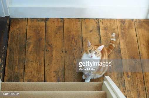 Cat sitting at bottom of stairs : Stock Photo
