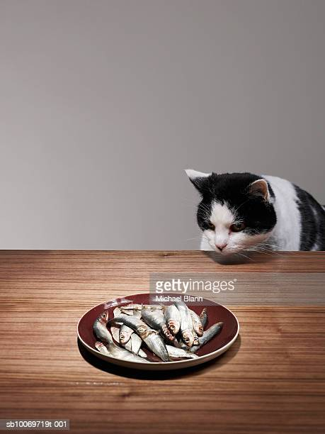 Cat sitting at table looking at fishes in plate