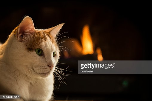 Cat sitting by fireplace : Stock Photo