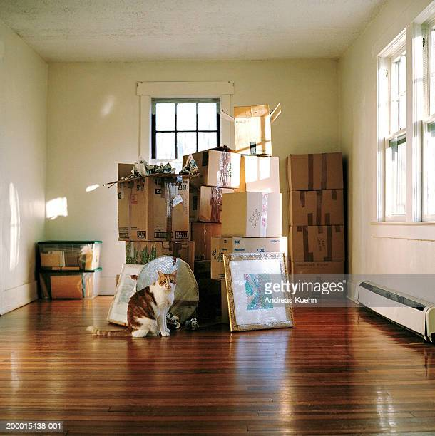 Cat sitting by stacks of packing boxes in bare room