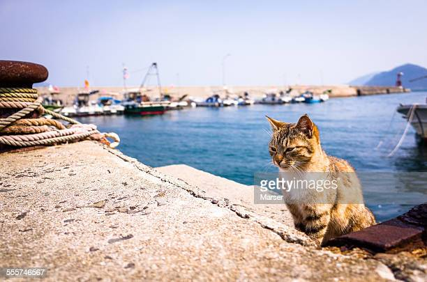 Cat sitting by the seaside