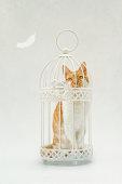 Cat sitting in birdcage