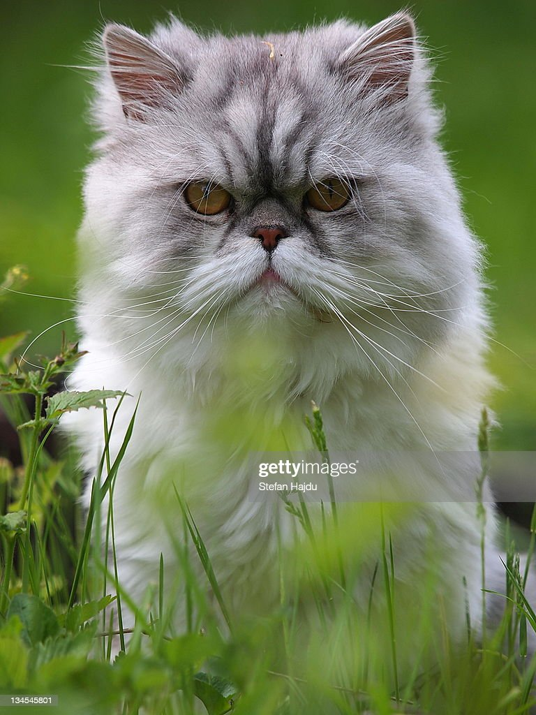 Cat sitting in grass : Stock Photo