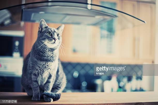 Chat assis dans la cuisine
