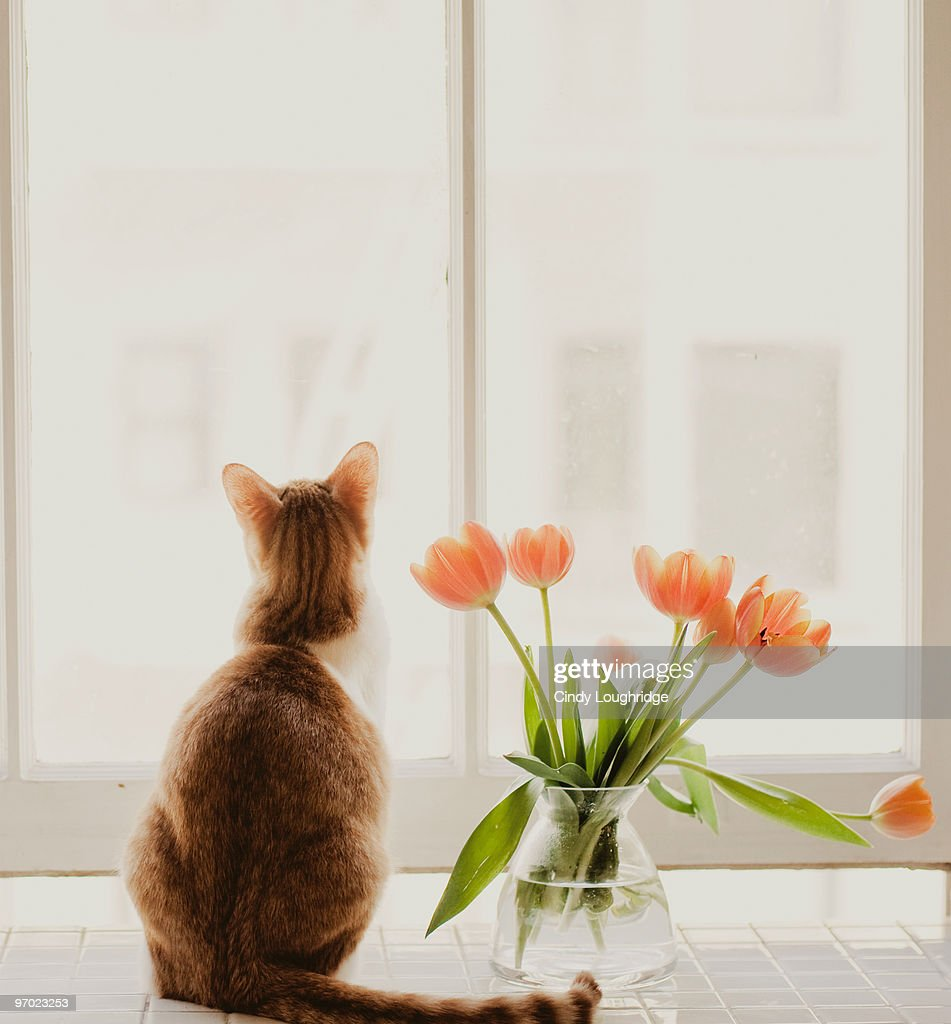 Cat Sitting In Window Stock Photo Getty Images