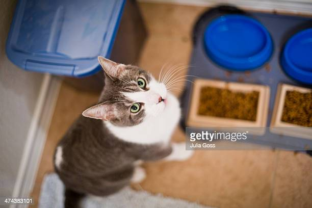 Cat sitting infront food bowls