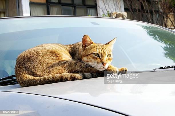 Cat sitting on car