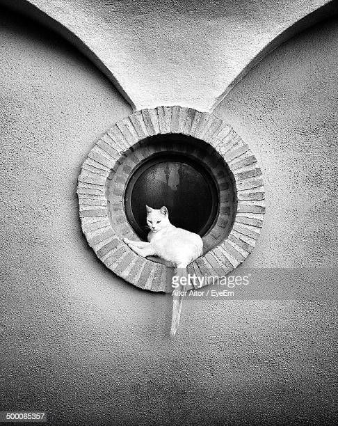 Cat sitting on circular window