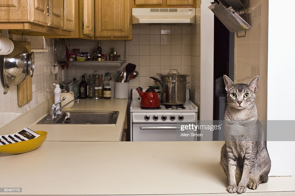 Cat sitting on countertop in small kitchen : Stock Photo