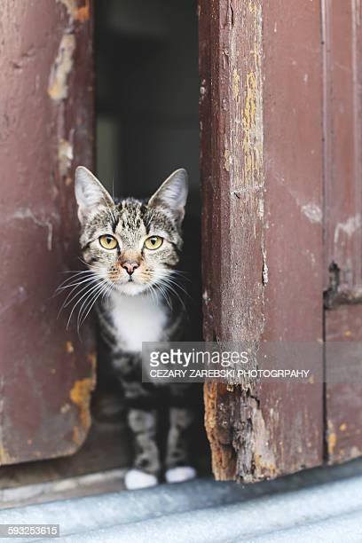 Cat sitting on door step