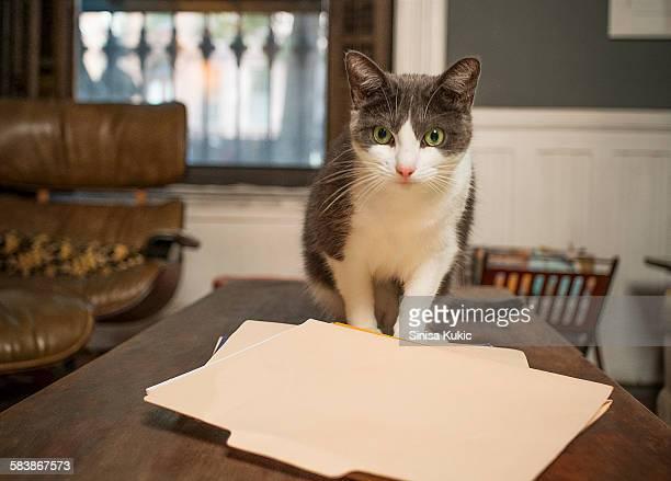 Cat Sitting on Paperwork CNNALEI759