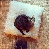 Cat Sitting on Pillow