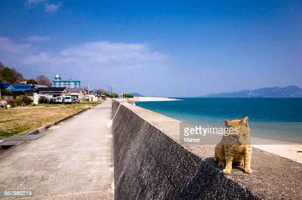 A cat sitting on the rim by the seaside