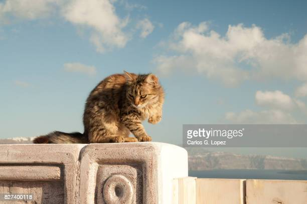 Cat sitting on top of wall