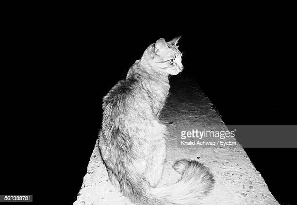 Cat Sitting On Wall At Night