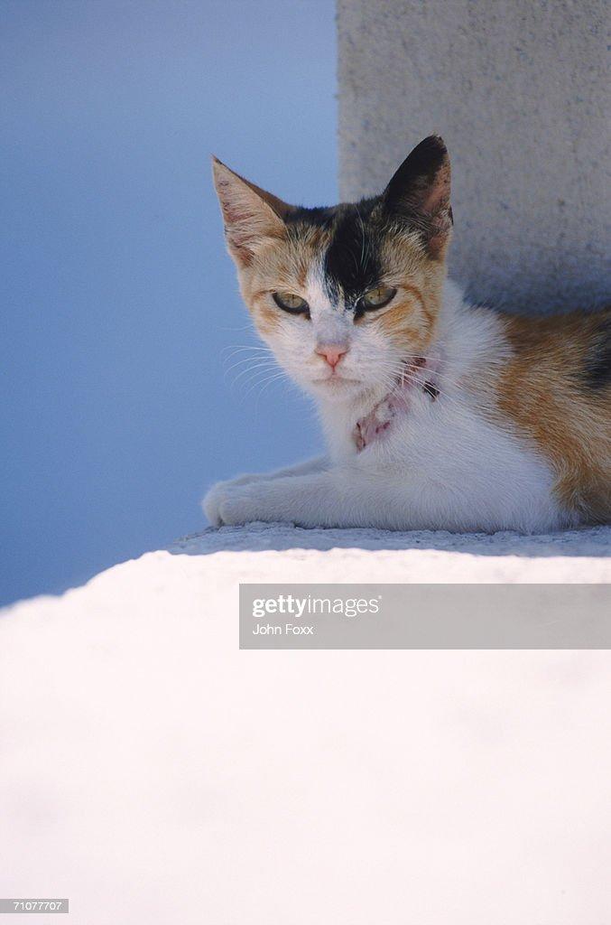 Cat sitting on wall : Stock Photo