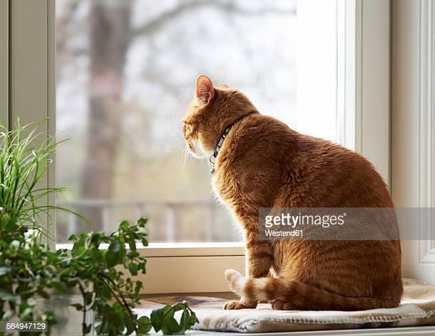 Cat sitting on window sill looking through window