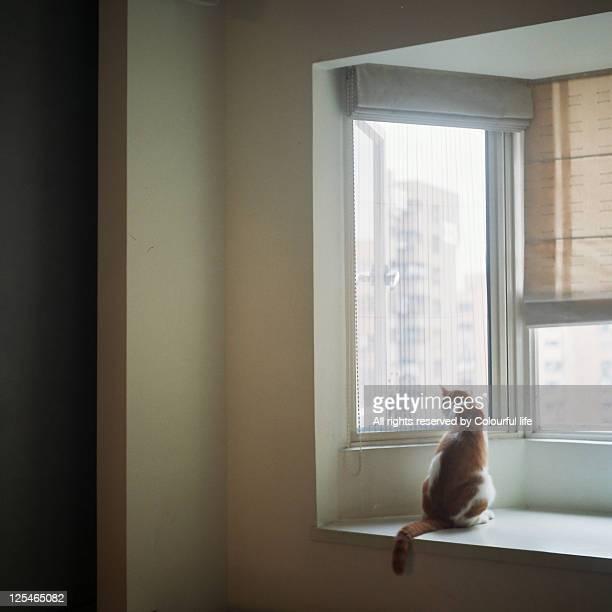 Cat sitting on window sill