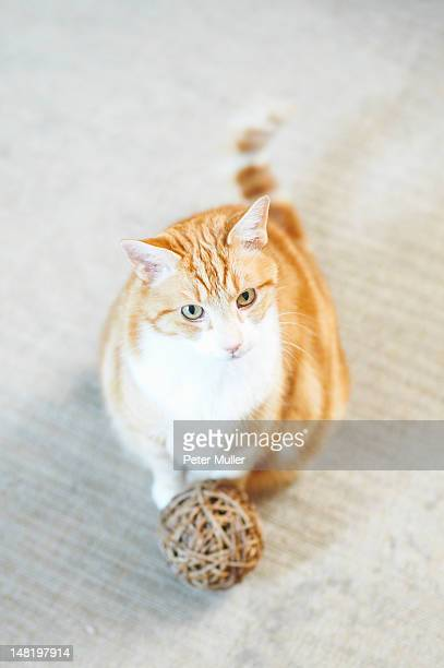 Cat sitting with ball of yarn